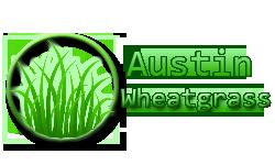 AustinWheatGrass